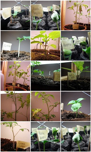 Indoor Seedlings