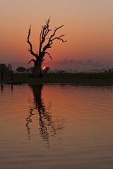 Amarapura sunset - Myanmar (David Michel) Tags: wood bridge sunset orange sun tree soleil burma coucher monk myanmar 28 tamron reflexion arbre reflets 70200 teck mandalay bois birmanie moine