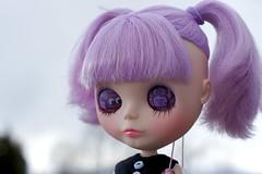 Purple Hootie Lids