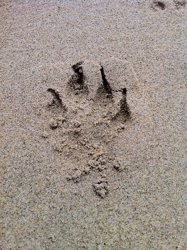 A dog's footprint