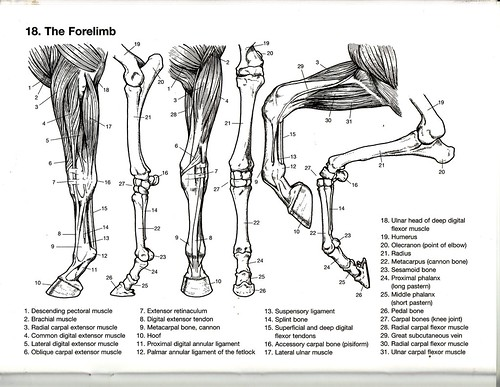 The Forelimb - a photo on Flickriver