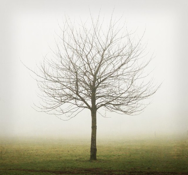 Tree in mist with texture