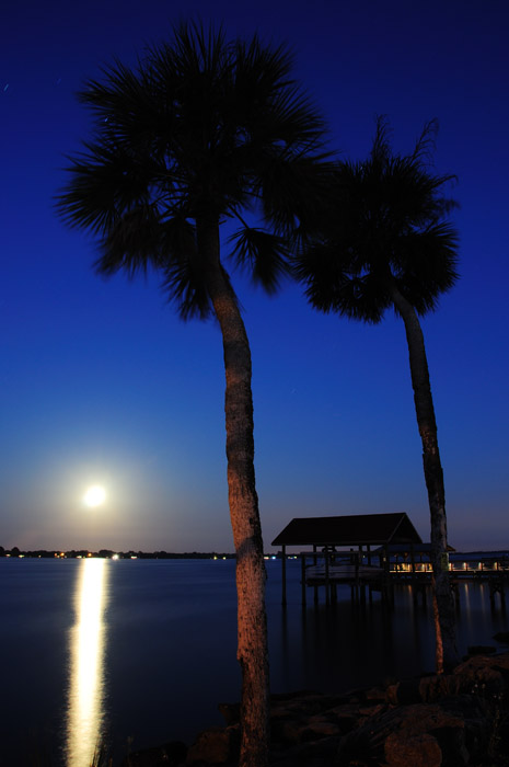 web_supermoon_palms_0057