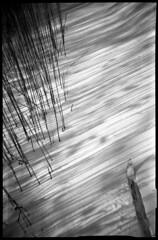 Reeds (Voxphoto) Tags: winter blackandwhite bw snow reeds michigan trix skiiing plasticcamera autaut aristapremium400 adestakinetic