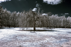 IMG_9061_IR Greeley Park, Nashua, NH (Syed HJ) Tags: ir infrared colorinfrared nashuanh greeleypark 720nm canon1740mm canon50d coloredinfrared greeleyparknashuanh