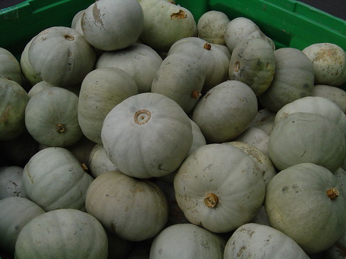 New Zealand pumpkins