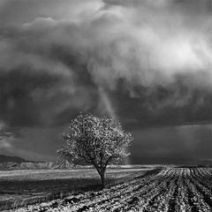 One Almond Tree Under the Storm (DavidFrutos) Tags: bw seascape storm monochrome arcoiris clouds square landscape monocromo rainbow paisaje bn murcia filter nubes nd tormenta filters canondslr filtro filtros gnd neutraldensity canon1740mm densidadneutra davidfrutos 5dmarkii niksilverefexpro artistictreasurechest redmatrix bestcapturesaoi imagicland theacademytreealley singhraygalenrowellnd3ss cagitándemula masterclasselite