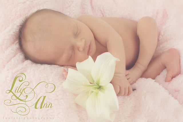 lily ann watermark