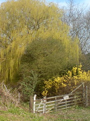 Start of Spring 2011, Totteridge