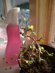 Bonsai baby with spring trim