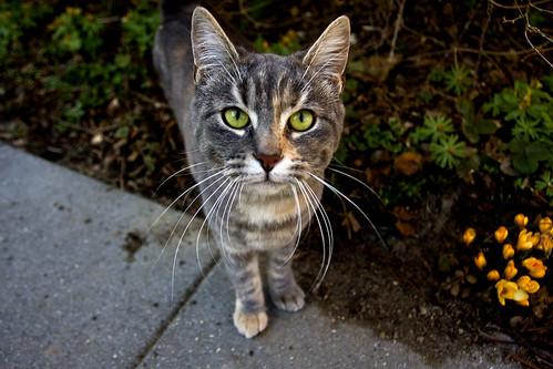 Cat Retro