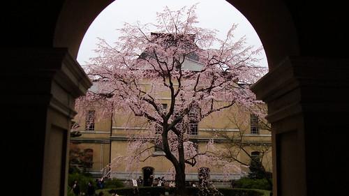 2011/04 京都府庁旧本館 #04