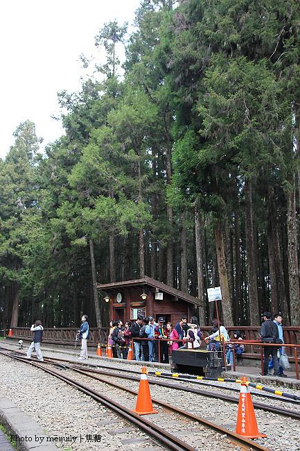 2011阿里山櫻花季晴天版31