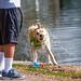 Water Dog!
