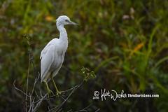 LBH -- Explore 9-26-2016 (ThruKurtsLens.com (Kurt Wecker)) Tags: 2016 kurtwecker nature naturephotographer thrukurtslenscom wildlife wildlifephotographer wildlifephotography