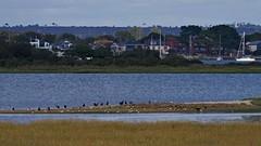 1331-26L (Lozarithm) Tags: arne rspb dorset landscape estuary coastline pooleharbour k1 55300 hdpda55300mmf458edwr