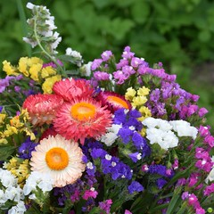 Flowers for my grandma (petrOlly) Tags: europe europa poland polska polen lodz cemetery summer flower flowers nature natura przyroda