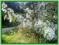 proljetna sličica