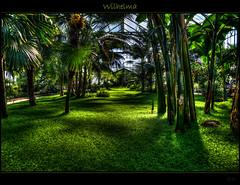 Green (Kemoauc) Tags: green photoshop garden botanical zoo nikon stuttgart hdr topaz wilhelma d90 photomatix nikond90 hdrterrorist kemoauc