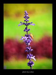 alone...! #2 [explored] (e.nhan) Tags: flowers light flower art nature closeup landscape colorful colours dof bokeh arts backlighting enhan