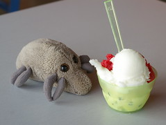 Dust Mite sneaks up on a bowl of gelato