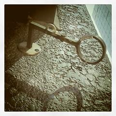 軒わらび 鉤腕は珍しい。
