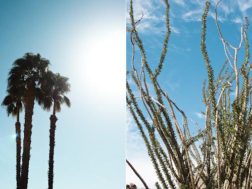 110329 palm springs 002