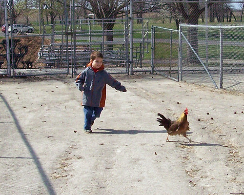 Chasing Chickens 2
