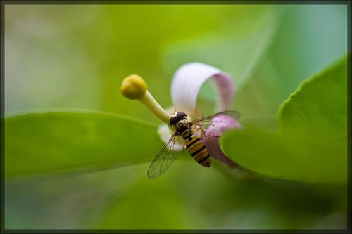 flower & a bee