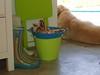 Galochas (SMAC colours) Tags: flores casa country campo decoração cor móveis objectos showyourhouse gardenhome inspirações