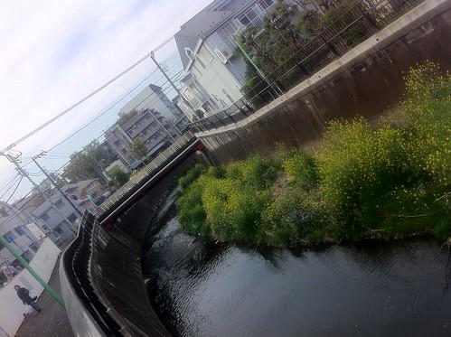 Nogawa river