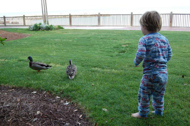 Ducks@OurDoor