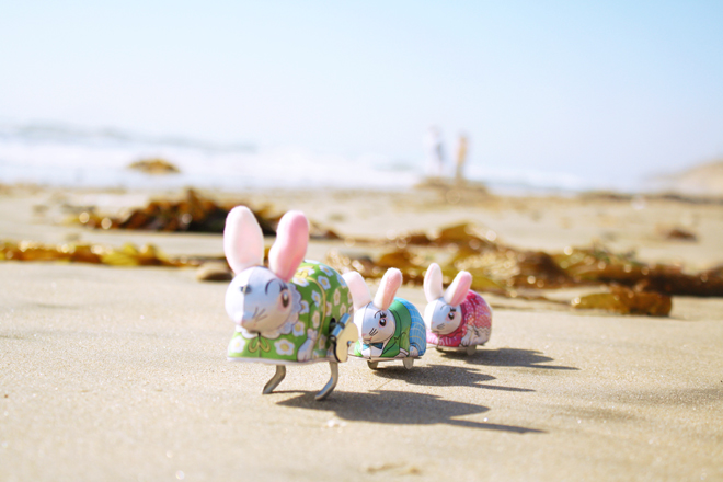 *Bunnies in the sand*