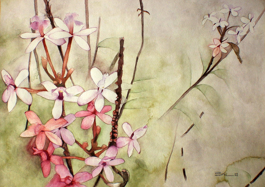 the world s most recently posted photos of orquídea and watercolor