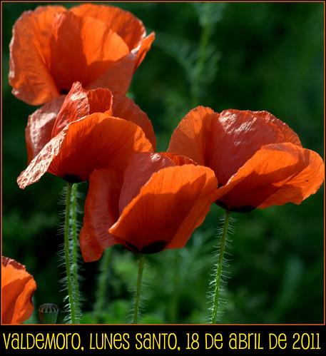 Estado de la cuestión: flora en Valdemoro, el Lunes Santo de 2011