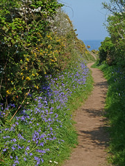 Bluebells by the coastal footpath, Rosemullion Head by Tim Green aka atoach