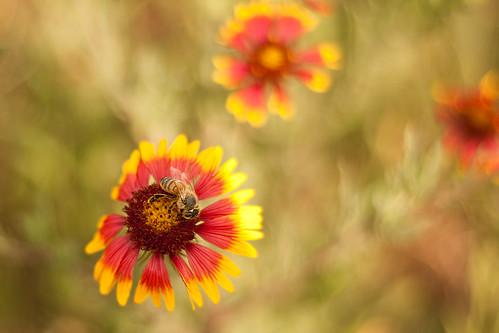 TX Wild Flowers