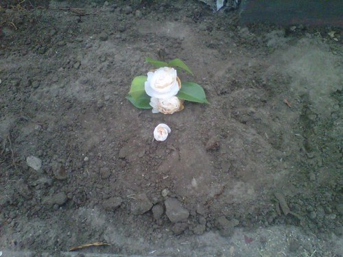 Here lies Mr. Possum