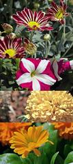 Flowers ( Khaled albakr ~) Tags: eye hail canon nikon rally ii 7d 5d 50 70200  d3   500d  2011  d90    550d d80        450d    d3x    d3000   d3s      d300s d7000