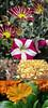Flowers (© Khaled albakr ~) Tags: eye hail canon nikon rally ii 7d 5d 50 70200 عين d3 منتديات عبد 500d خالد 2011 الكويت d90 الرياض تحدي للبيع 550d d80 سحر اصدقاء جهاد ناصر البكر وناسه الضوء 450d نيكون تطعيس التميمي d3x جده يزيد العطيه d3000 المجيد الراجحي d3s عدسات نايكون الرمال حائل رالي d300s d7000 الاقلاع المطيويع السمكه ترايدنت دكار