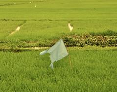 comercio[hoian]000 (b.project) Tags: travel commerce vietnam hoian frenchcolony massimillaphotography