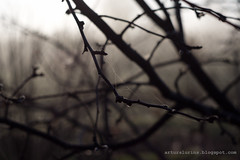 cobwebs (arturslurins) Tags: backyard latvia cobwebs jelgava