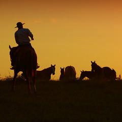 Ocaso (Eduardo Amorim) Tags: sunset brazil horses horse southamerica field brasil criollo caballo cheval atardecer caballos tramonto sonnenuntergang prdosol campo cavalos pelotas pferde herd cavalli cavallo cavalo gauchos pferd riograndedosul pampa poniente champ anoitecer herds coucherdesoleil campanha brsil chevaux gaucho entardecer crepsculo  amricadosul poente gacho amriquedusud  gachos  sudamrica suramrica amricadelsur sdamerika crioulo troupeau caballoscriollos criollos  tropillas costadoce americadelsud tropilhas tropilla crioulos cavalocrioulo americameridionale tropilha caballocriollo auffangen troupeaux eduardoamorim cavaloscrioulos