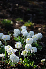 Blossoms (zobl_vie) Tags: oslo hage botaniske tyenhagen universitetes