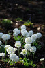 Blossoms (zobl_vie) Tags: oslo hage botaniske tøyenhagen universitetes