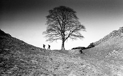 Walkers at Sycamore Gap, Hadrian's Wall, Northumberland (iainmac2) Tags: tree nature landscape northumberland hadrianswall leicam2 zm kodaktrix400 scannedfilm ilfosol sycamoregap sonnar5015zm zeisscsonnar50mmf15 zmcsonnar50mm mygearandme csonnart1550 sonnarc5015zm zeisszm50mmcsonnar zeisszmcsonnar