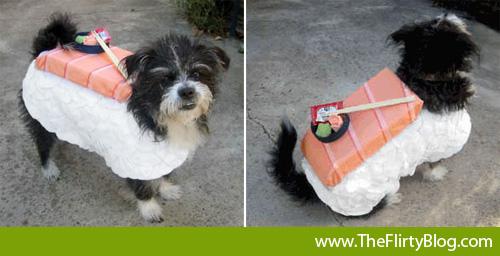 kitai-nigiri-sushi-dog-halloween-costume
