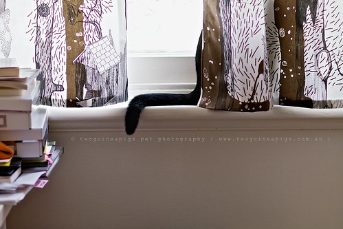 Snooping black cat by twoguineapigs pet photography