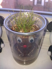 Joeys grass update