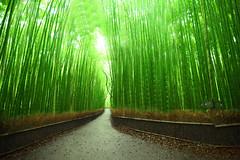 Bamboo forest in Arashiyama (kisyu) Tags: trip travel heritage japan canon photography kyoto tokina     5dmarkii atx1628art
